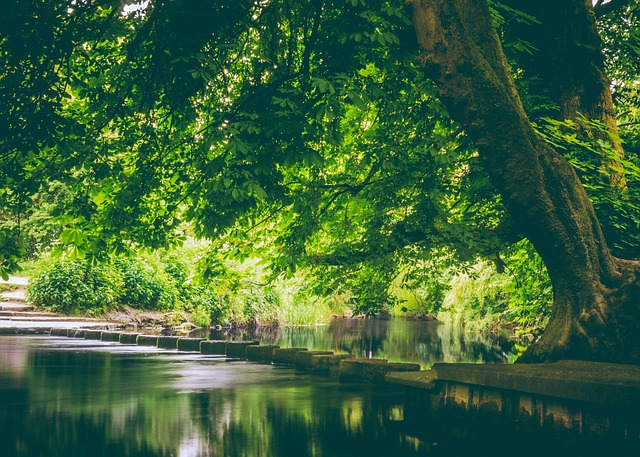 Trees and flowing river
